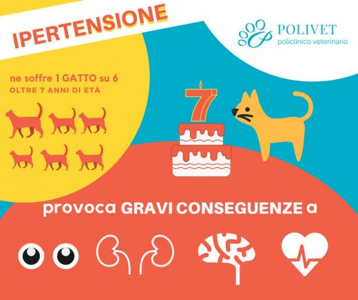 Il 70 Dei Gatti Ipertesi Soffre Di Insufficienza Renale Polivet