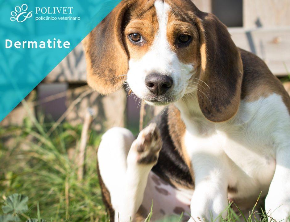 La dermatite del cane: quali sono i sintomi e come curarla