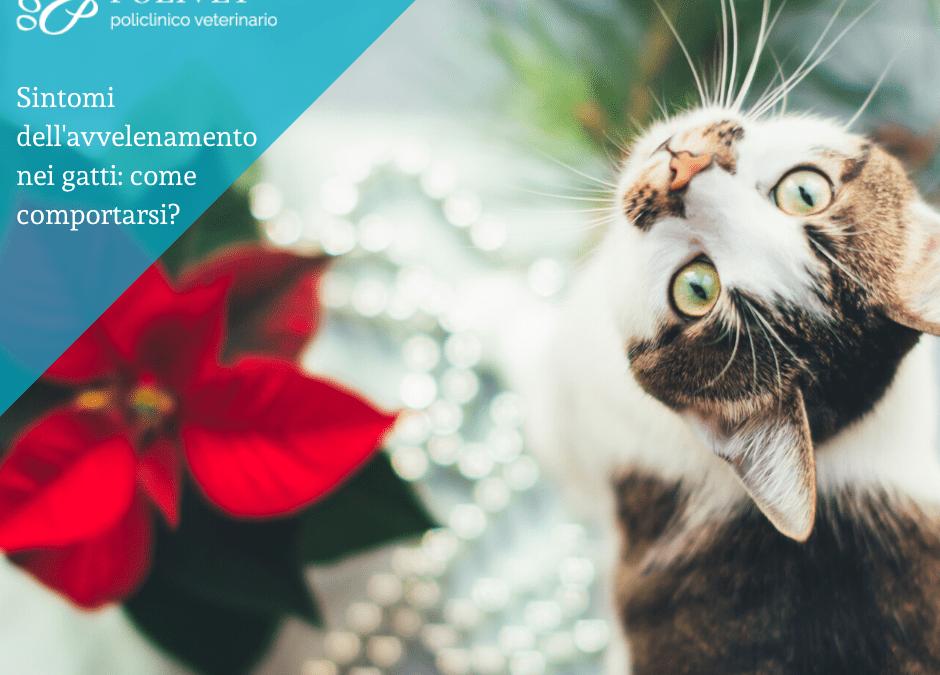 Sintomi dell'avvelenamento nei gatti
