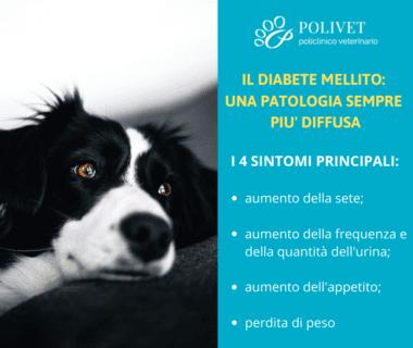 Il diabete mellito nel cane e nel gatto