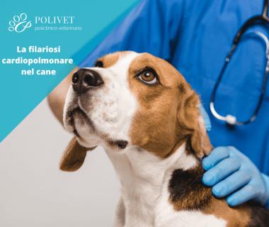 immagine cane con filariosi cardiopolmonare