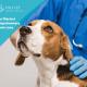 Filariosi cardiopolmonare nel cane
