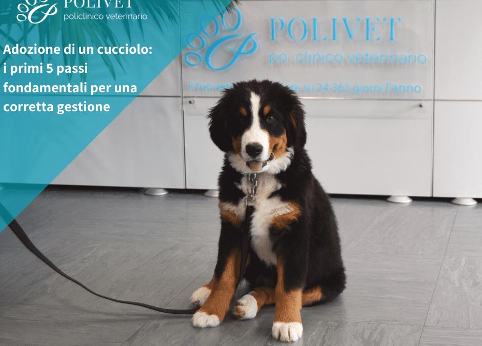 immagine cucciolo: importanza dell'adozione