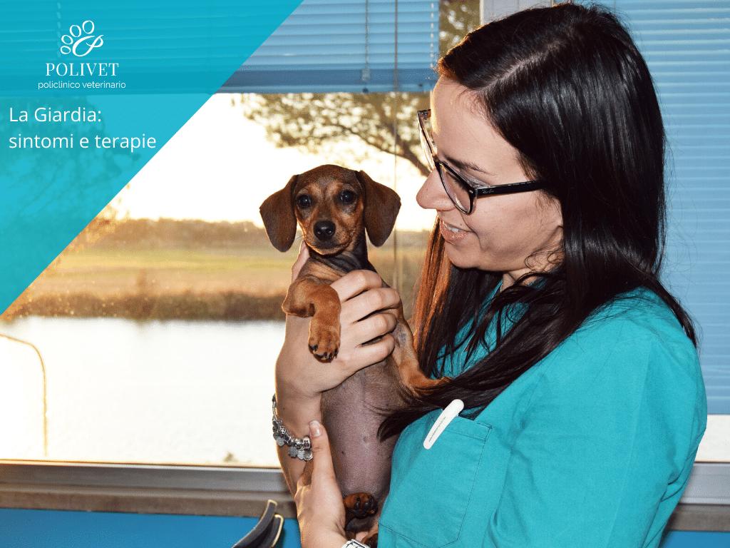 Domande Al Veterinario Cane la giardia nel cane: sintomi e trattamenti – polivet