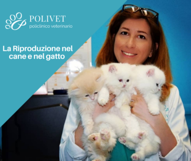 Riproduzione cani e gatti