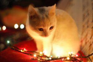 Tra i cibi dannosi per i gatti soprattutto la cipolla