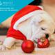 Natale con i pet, i consigli del veterinario